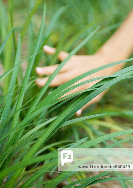 Frauenhandberühren lange Gras Frauenhandberühren lange Gras