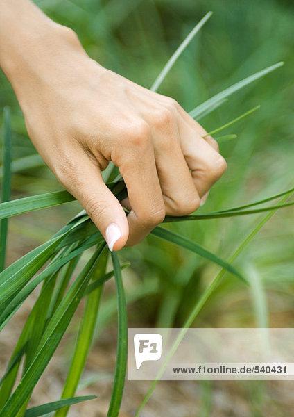 Frau hand greifen Handvoll lang Gras