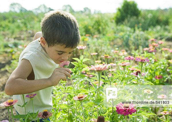 Boy riechenden Blume