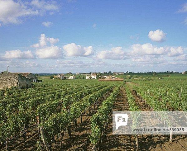 Weinberge. Bordeaux Region. Frankreich