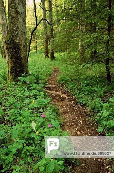 Great Smoky Mountains National Park. Trail at Whiteoak Sink. Tennessee. USA