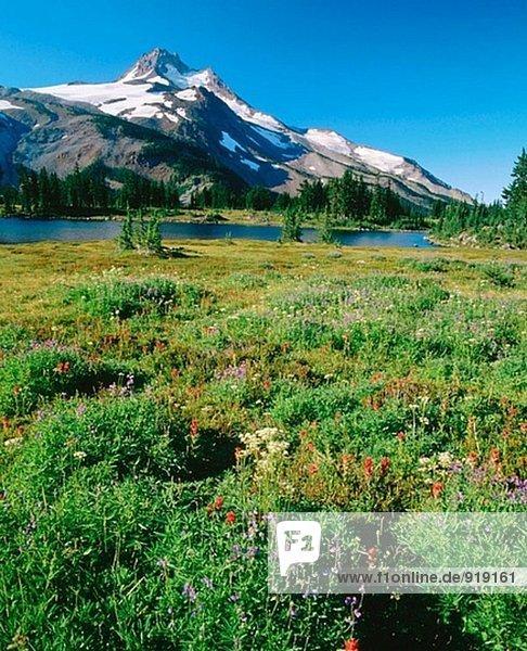 Mt. Jefferson und Sommer Wildblumen. Mount Jefferson Wildnis. Oregon. USA