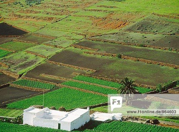 Felder. De Los Valles Dorf. Insel Lanzarote. Kanarischen Inseln. Spanien