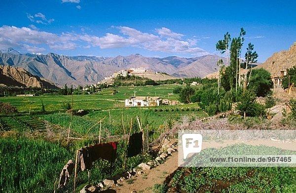 Hemis Kloster. Ladakh. Jammuer und Kaschmir  Indien