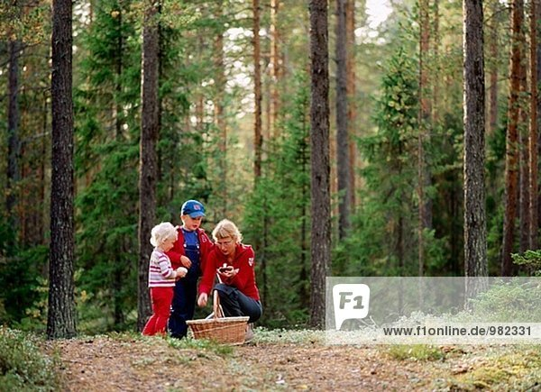 Mutter mit ihren zwei Kindern in Pinienwald Pilze aus dem Boden. Ein  Västerbotten  Schweden