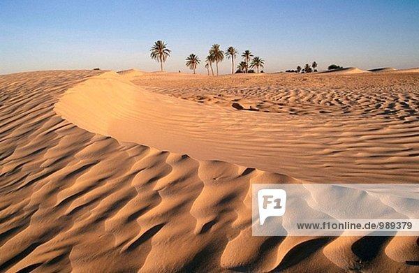 Ofra sand dunes. Douz. Tunisia.