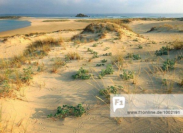 Corrubedo Dünen. Nationalpark. Coruña. Spanien.