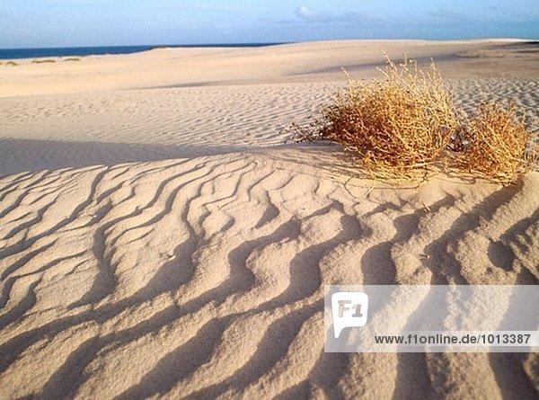 Corralejo Dünen  Fuerteventura. Kanarische Inseln  Spanien
