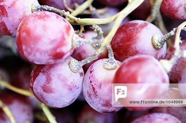 Trauben Obst
