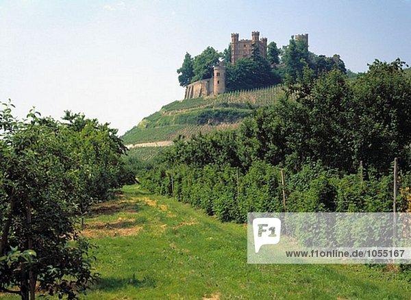 Weinberge  Ortenberg Schloss  Kinzigtals  Baden-Württemberg  Deutschland Weinberge, Ortenberg Schloss, Kinzigtals, Baden-Württemberg, Deutschland