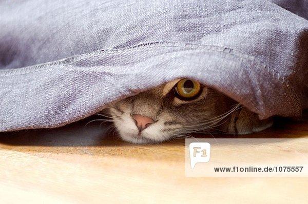Cat schlech aus unter Vorhang