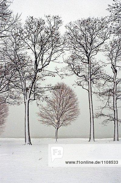 Winterszene mit nassen Schnee stecken auf Bäume an Port Huron  Michigan
