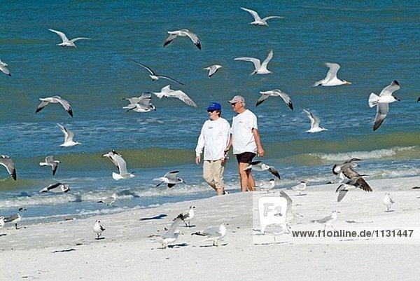 Besucher St Pete Beach und Pass-A-Kühlergrill engagieren sich beim vacationing in Übung Entspannung und Hobbys. Florida. USA.