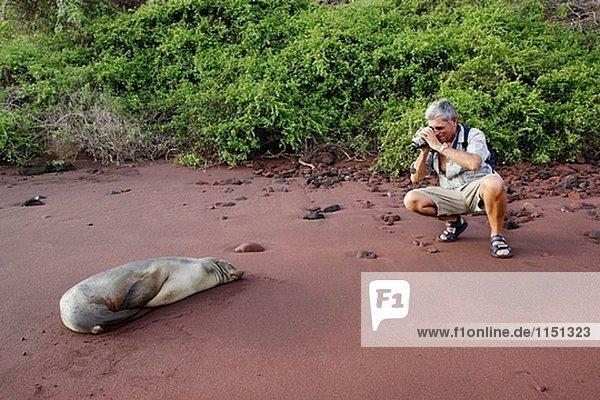 Seelöwe Fotograf Galapagosinseln