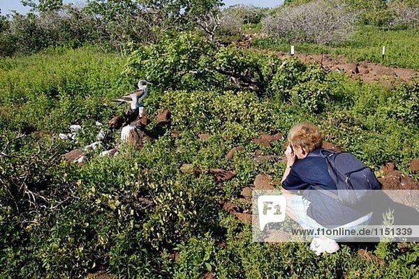 Tourismus und Blaufußtölpel (Sula Nebouxii). Seymour Insel  Galapagos-Inseln. Ecuador