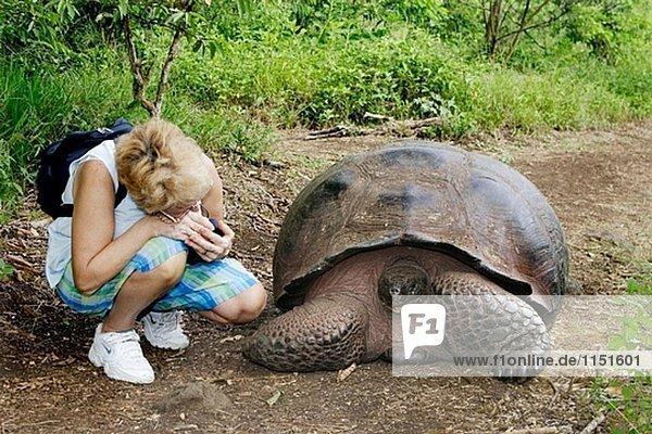 Galapagos Riesenschildkröte (Geochelone elephantopus bezeichnet)