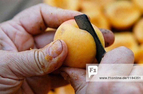Vorbereitung Aprikosen getrocknet. Sonne getrockneten Früchten. Porreres. Mallorca. Balearen. Spanien.