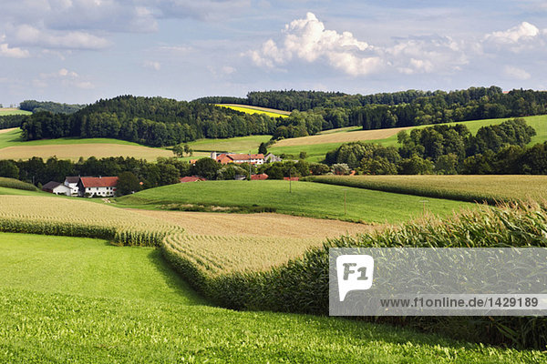 Gerany  Upper Bavaria  fields in hilly landscape