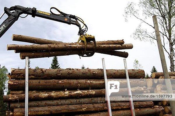 Kranich heben Holz Turmkran