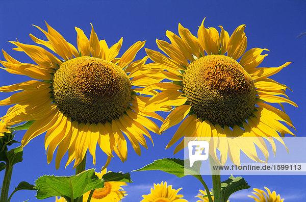 0962-00091,Attraktivität,Außenaufnahme,Blume,Botanik