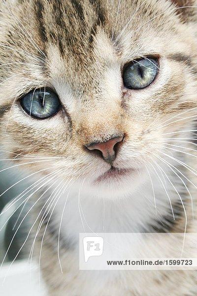 Nahaufnahme der Kätzchen 's Gesicht