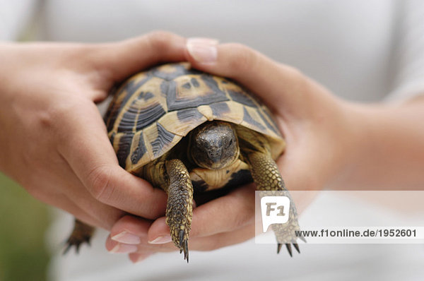 Person holding turtle  mid section