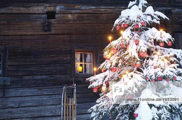 Weihnachtsbaum mit Schnee bedeckt  Nahaufnahme
