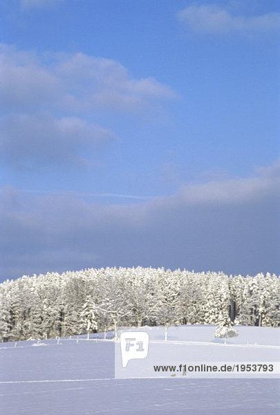 Deutschland  Bayern  Fürstenfeldbruck  Wanderer in verschneiter Landschaft