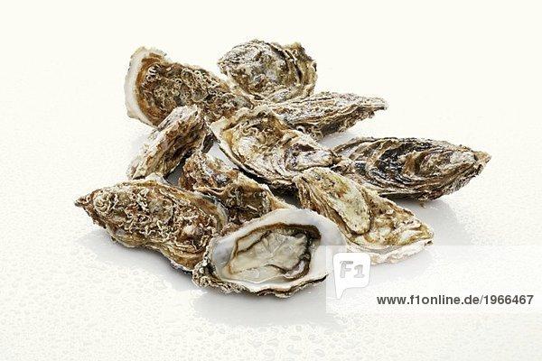 Frische Austern mit Wassertropfen
