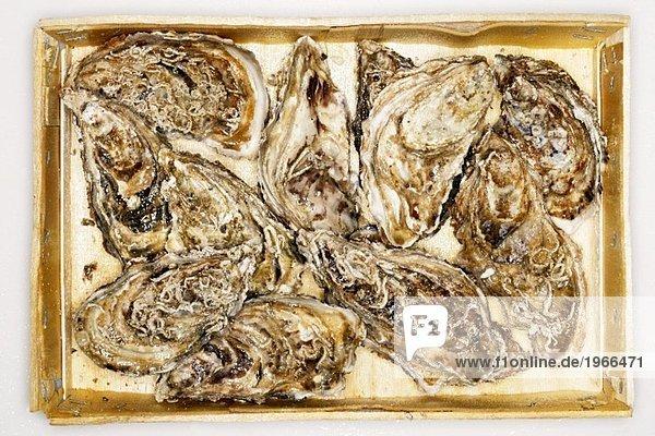 Frische Austern in Kiste (Draufsicht)