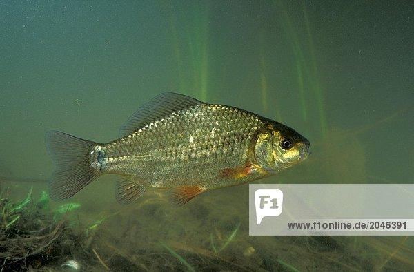0500028201B,Europa,Fauna,Fisch,Konzept