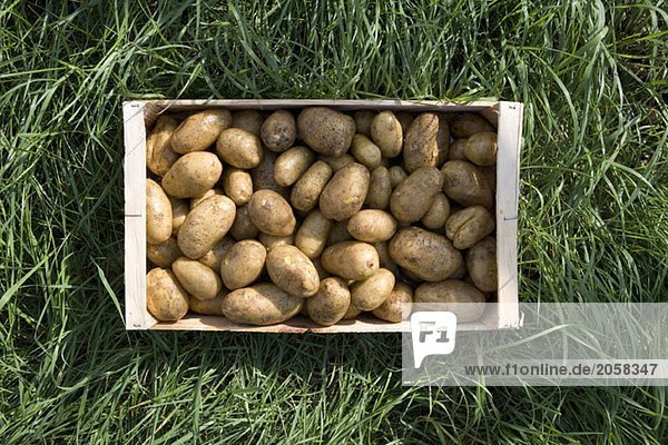 308017,Aufsicht,Botanik,Boxen,Crate