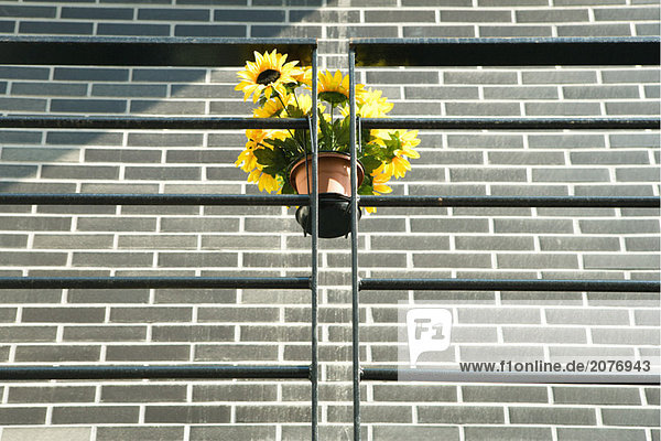 Fake sunflowers hanging on railing,  low angle view