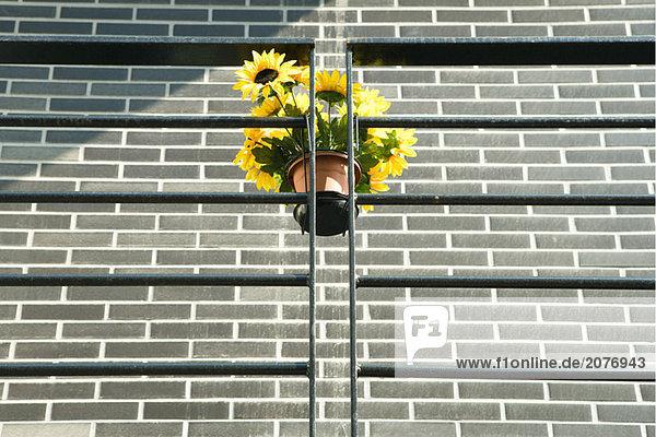 Unechter Sonnenblumen hängen Geländer  Untersicht