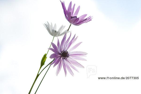 Blumen  Himmel im Hintergrund