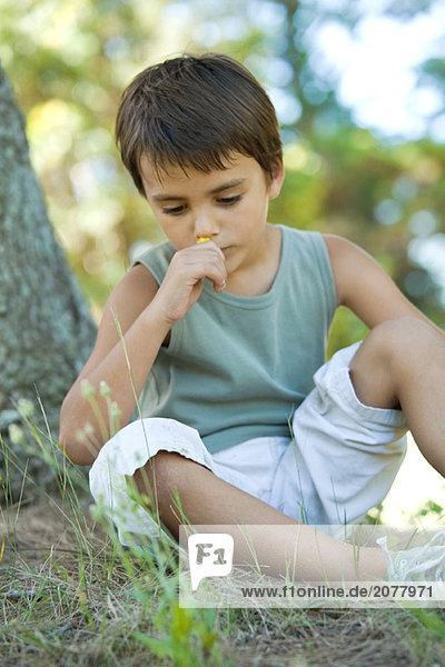 Boy sitting on ground  holding flower up to nose