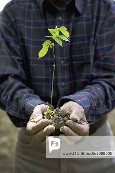 Man Holding Beech seedling  close-up