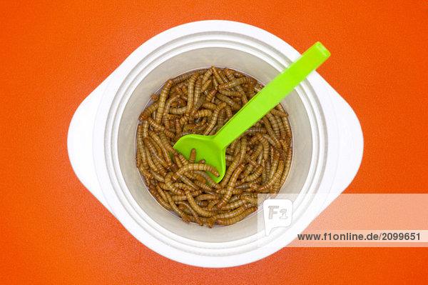 Mehlwürmer in Kunststoffplatte  Nahaufnahme