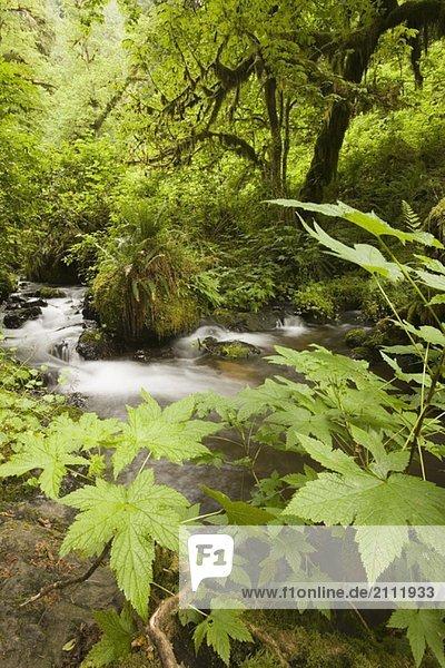 Munson Creek Falls south of Tillamook  Oregon  USA