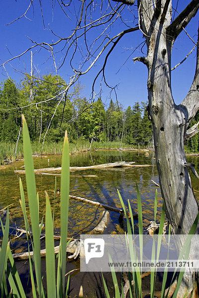 Wetlands  Canada  Ontario  Campbellville