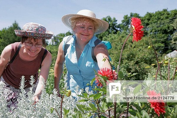 Botanischer Garten Botanische Kleintransporter Frau Blume Höhle Kanada Quebec City Universität Lieferwagen