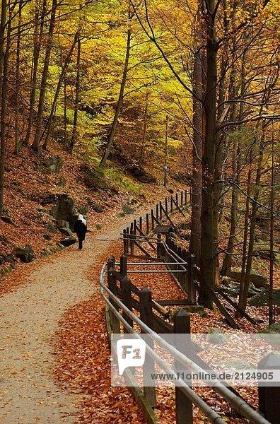 Szklarka Flusses an der Grenze. Nationalpark Riesengebirge  Karpacz. Niederschlesien  Polen.