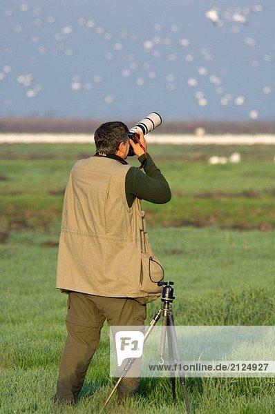 Fotograf photographieren wandernden Vögel im Winter  Merced National Wildlife Refuge  Central Valley  Kalifornien  USA