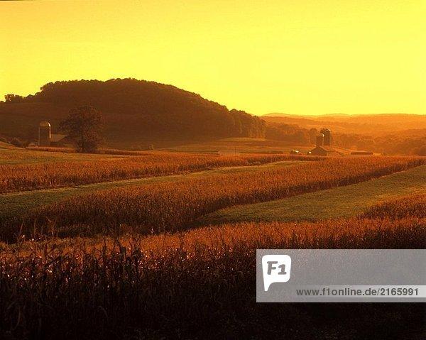 Cornfield  Brookville  westlichen Pennsylvania  USA