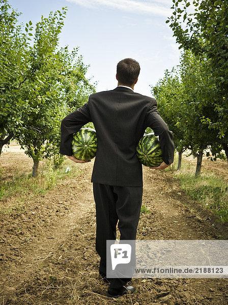 Mann mit zwei Melonen in der Rückansicht des Obstgartens.