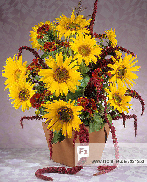 Blumenstrauß : Sonnenblumen   Sonnenbraut und Fuchsschwanz