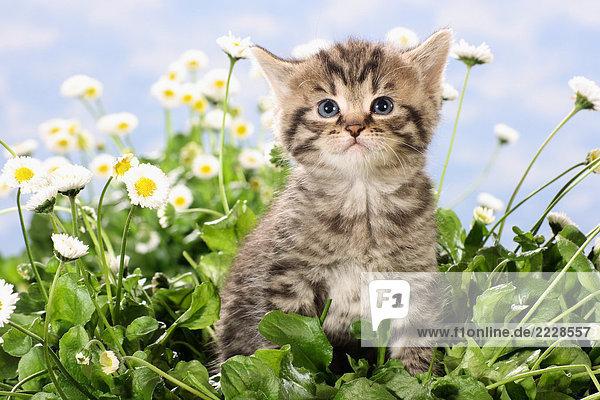 Kätzchen sitzend zwischen Blumen Kätzchen sitzend zwischen Blumen