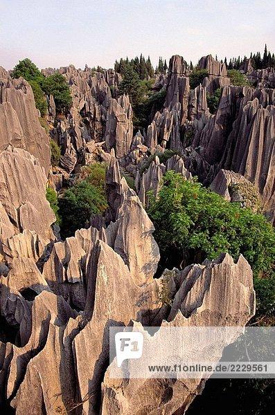 Shilin  der Shilin. Yunnan  China Shilin, der Shilin. Yunnan, China