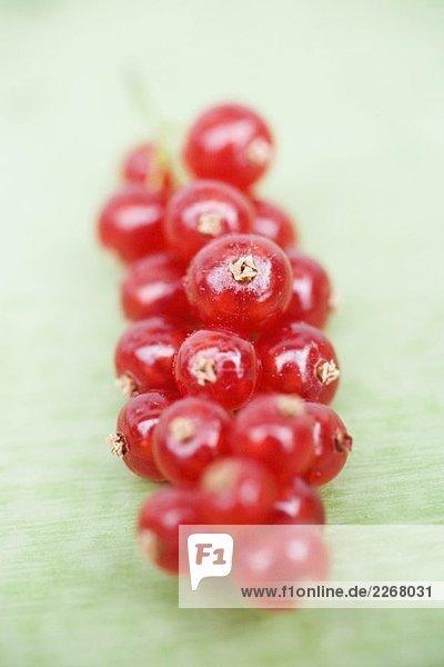 Rote Johannisbeeren (Close Up)