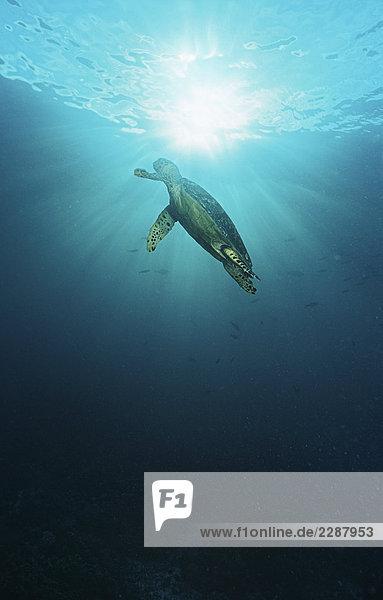 unterhalb Meer